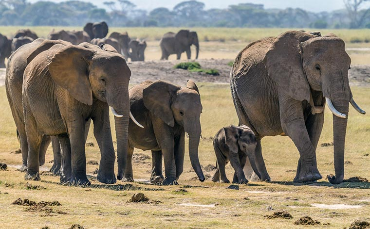 5 best places to hangout with elephants