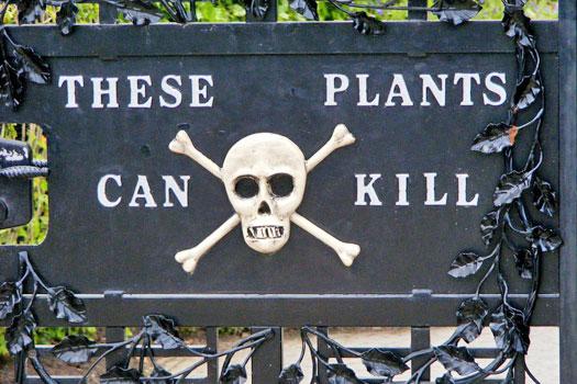 Poison Gardens, Alnwick Gardens, England. Photo by Jo Jakeman