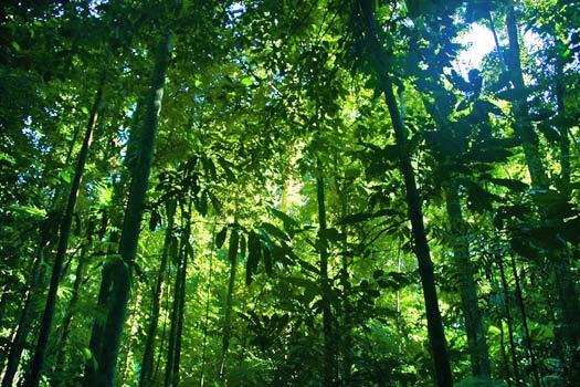 Daintree Rainforest. Photo by ben britten
