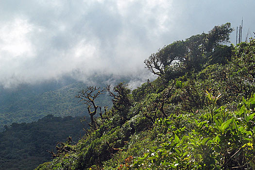 Monteverde Cloud Forest Reserve. Photo by Comrogues