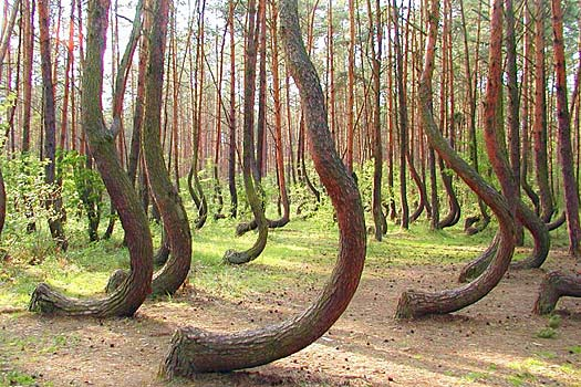 The Crooked Forest. Photo by KILLTHEMWITHKINDNESS