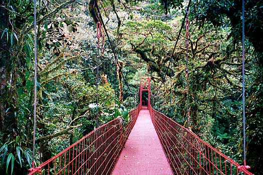Monteverde Cloud Forest. Photo by Mike Goren