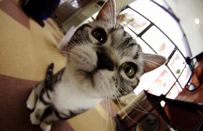 A curious cat stares into the camera lens.