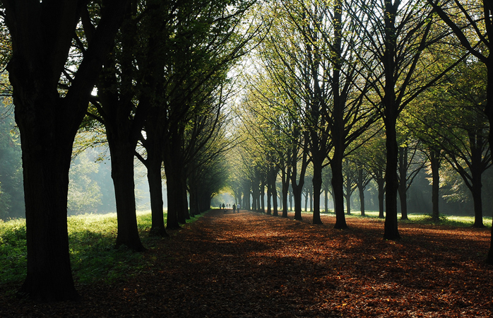 A tree-lined path of the Amsterdamse Bos.