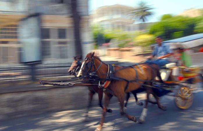 A horse strolls through the Heybeliada island on a summer's day.