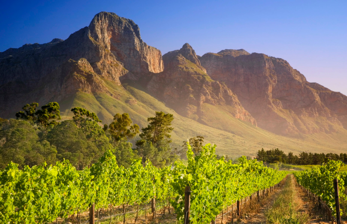 Stellenbosch Mountain and vineyards.