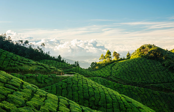 14-Munnar-munnar-sightseeing-places-to-visit-in-india