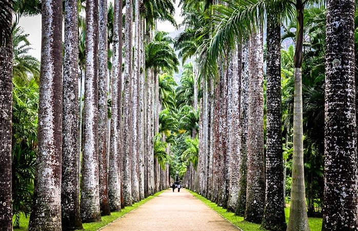 9-jardim-botanico-things-to-do-in-rio-de-janeiro-rio-de-janeiro-botanical-garden