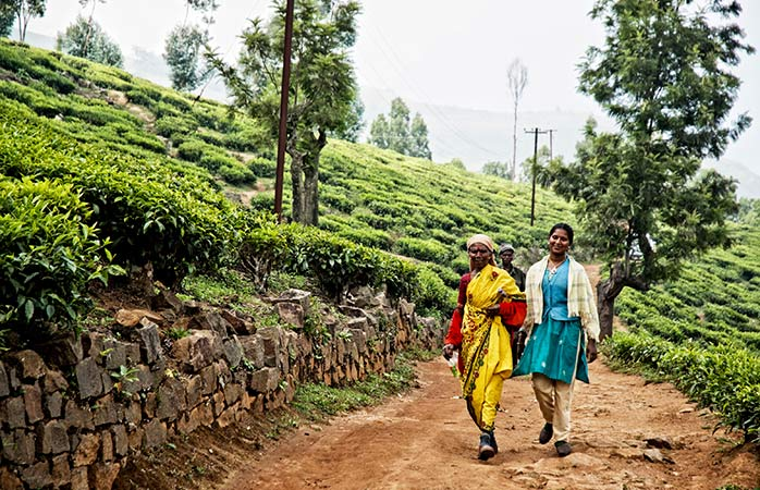 11-Ooty-ooty-tourism-best-hotels-in-ooty-places-to-visit-in-india