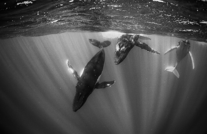 Lose your fears and just say 'yes!' to swimming with humpback whales