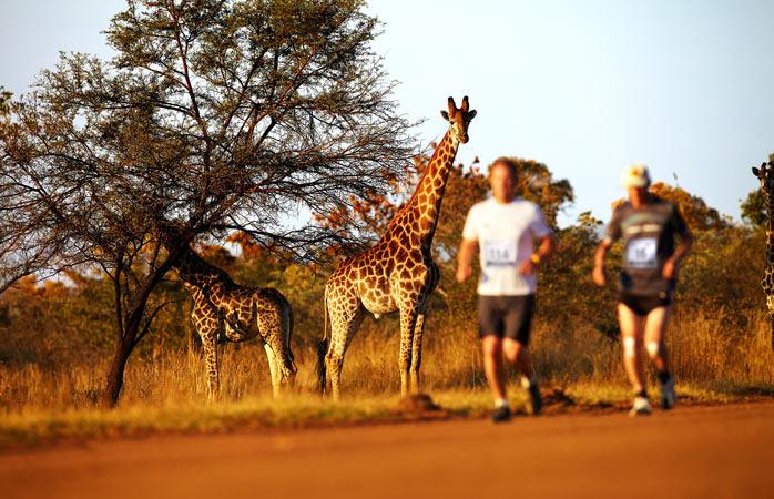 What a wild idea to run through the Entabeni Game Reserve © Albatros Adventure Marathons
