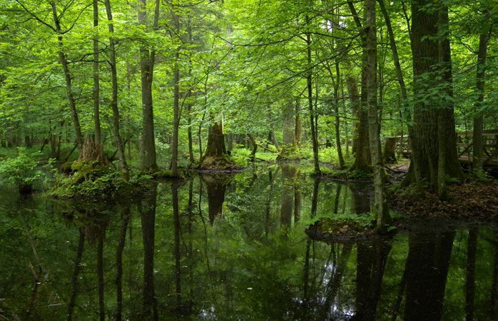 Quiet and serene: the primary Białowieża Forest is an oasis of peace