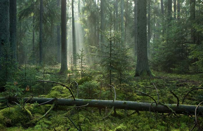 Welcome ... to Białowieża Forest