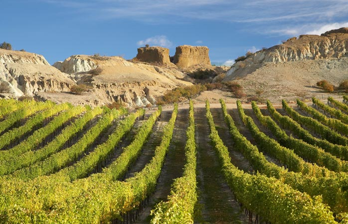 The Central Otago wine region offers stunning landscapes, unique wines and extreme adventures