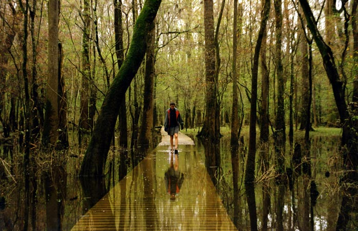 Ankles deep in South Carolina waters at Congaree National Park