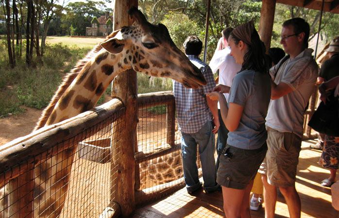 Re-visit the Karen Blixen days in good (giraffe) company