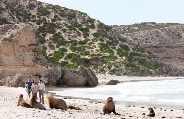 Go seal spotting at Seal Bay Conservation Park, Kangaroo Island