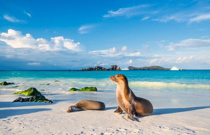 Spot the sea lions in the Galápagos