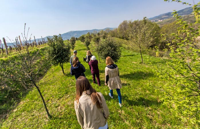 Go truffle hunting in beautiful Istria