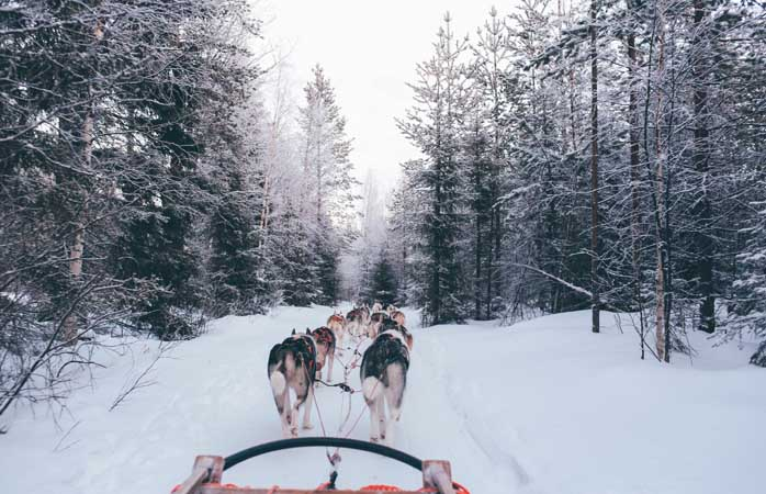 Gliding all the way on a husky-drawn sleigh in Finnish Lapland