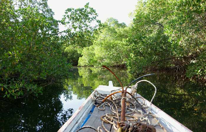 A pirogue ride to discover the fauna hiding in the mangroves on the Saloum Delta