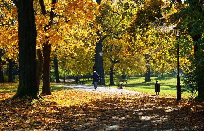 A stroll through autumn leaves in Lodz