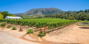 Car Rental in Stellenbosch