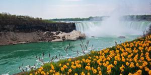 Car Rental in Niagara Falls